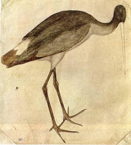 Cigogne de Pisanello date de 1430 ©Wiki-art